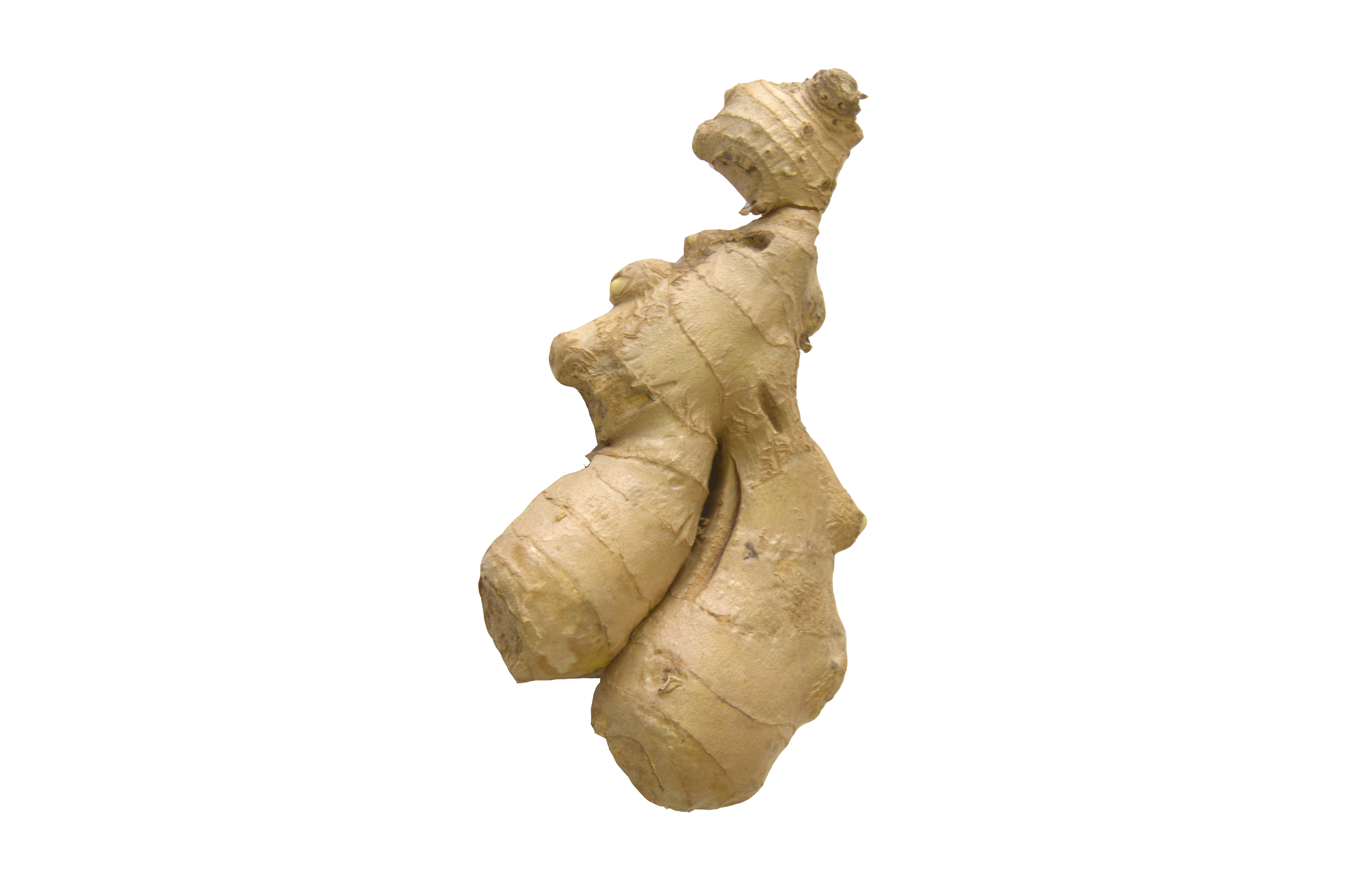 gember wortel /kgr